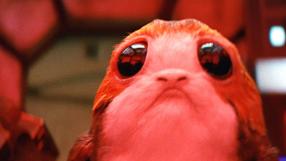 Os porgs de Os Últimos Jedi existem por causa de animais reais
