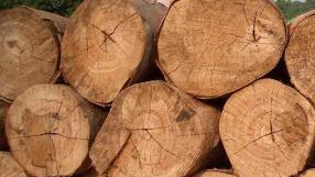"""Cientistas desenvolvem """"super madeira"""""""